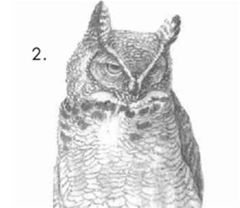 How To Draw An Owl Meme - how to draw an owl know your meme