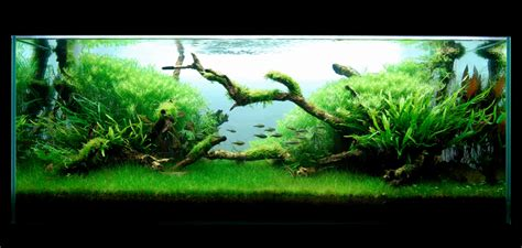 Aquascaping Magazine by Aquascaping World Magazine World Class Aquascaper George Lo