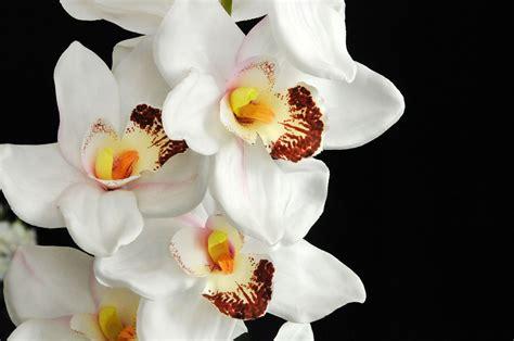 orchidea fiore evergreens fiori e piante ornamentali artificiali