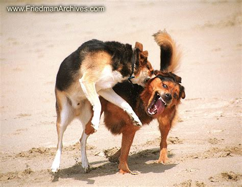 perros e hijos de hijos de 187 perros e hijos de perra
