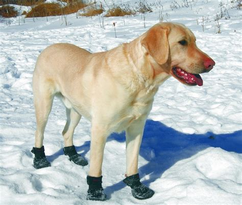 dogs in boots booties for snow how to choose the right shoes for your