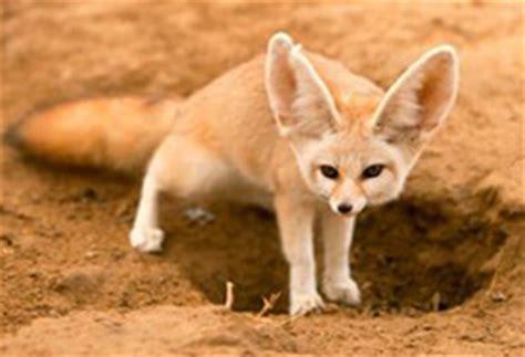 imagenes animales que viven en el desierto nombres animales viven desierto animales del desierto