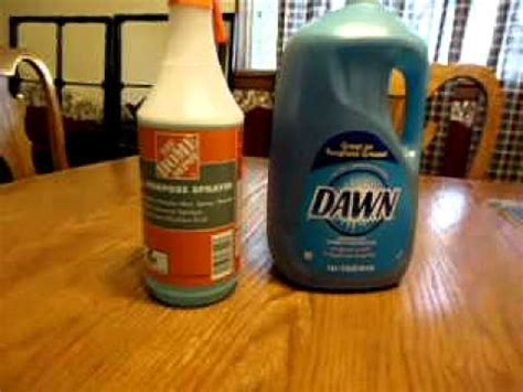 homemade bed bug killer dish soap bug killer youtube