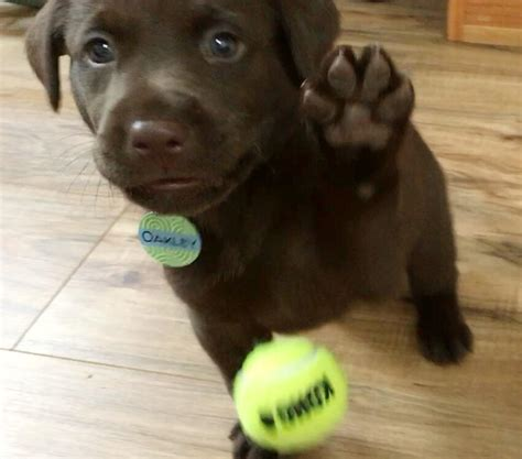 puppy high five high five puppy www pixshark images galleries with a bite