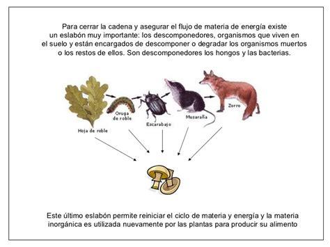 cadenas y redes troficas o alimentarias cadenas alimentarias y redes troficas