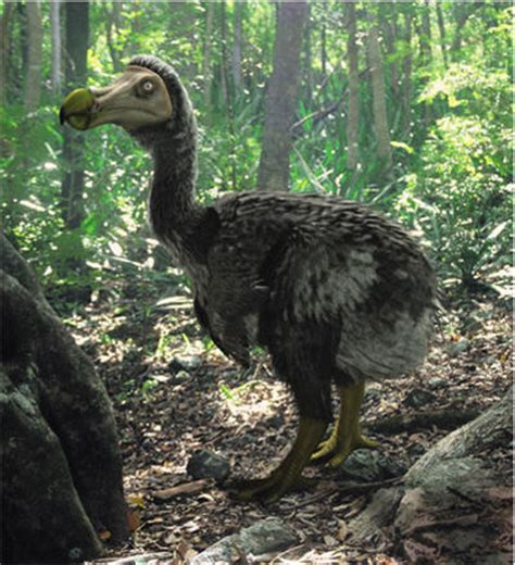 dodo animal wildlife