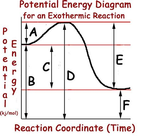 energy diagram chemistry endothermic and exothermic reactions ap biology