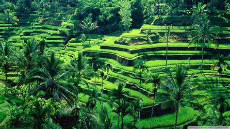 potensi sektor pertanian di indonesia menebar manfaat