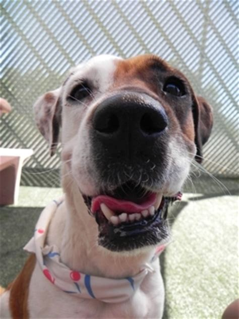 pacc dogs pima animal care center hosts free microchip event tucson local media calendar