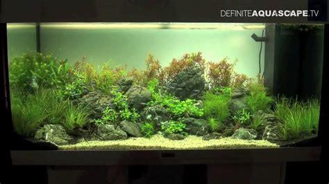Aquascaping   Aquarium ideas from ZooBotanica 2013, pt. 1