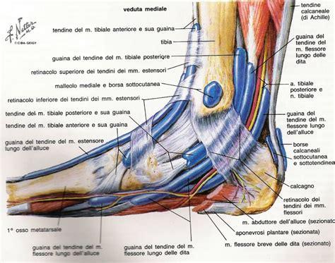dolore alla pianta piede interna distorsione della caviglia e piede protocollo
