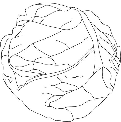Pics Of Lettuce Coloring Home Lettuce Coloring Page