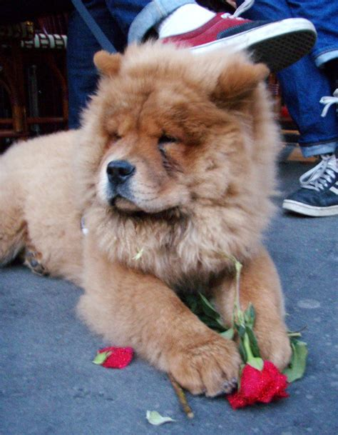 dogs that look like what is the name of the that looks like a teddy