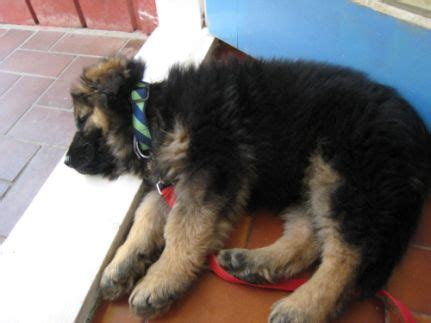 how to house your puppy how to house your perfectly or canine habit
