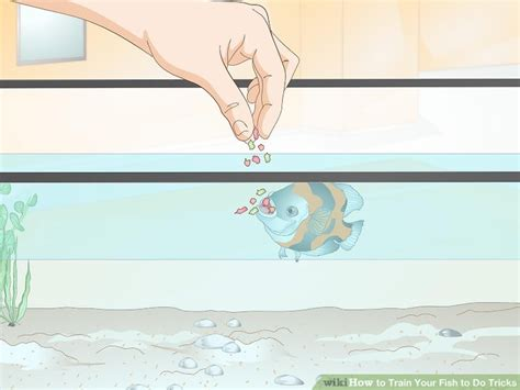 how to my to do tricks how to your cat do cool tricks howsto co