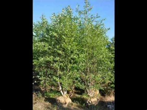 Craigslist South Jersey Farm And Garden by Wetlet Township Mashpedia Free Encyclopedia