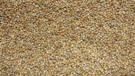 whole grains meaning in marathi wiki millet upcscavenger