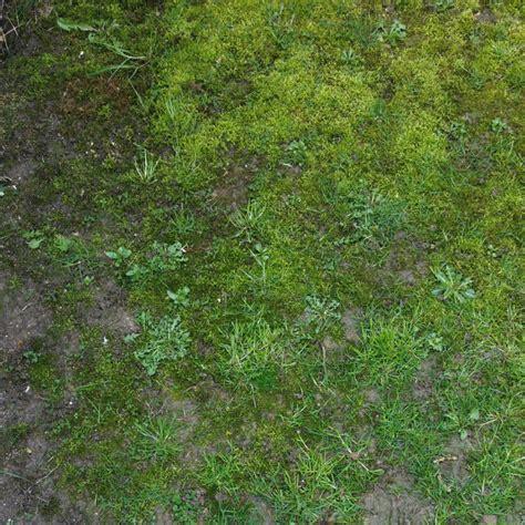 Rasen Mulchen Rasen M Hen Rasen Experte Rasen Anlegen