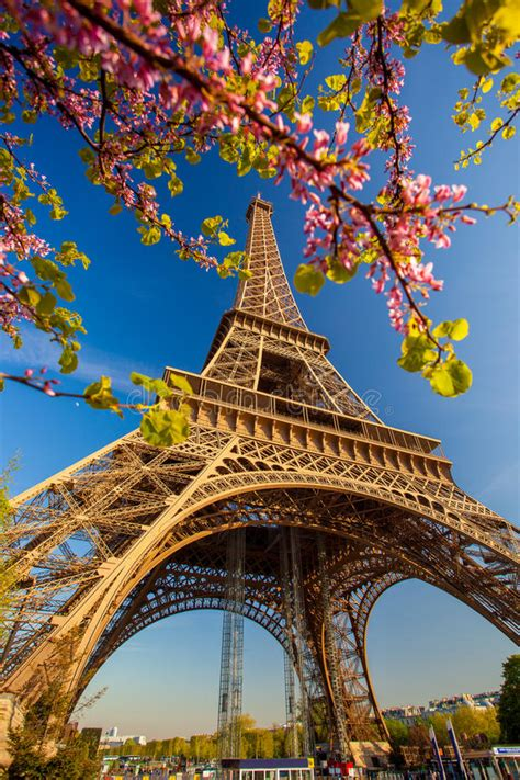 eiffel tower  spring tree  paris france stock image