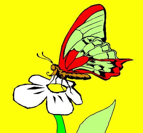 farfalla su fiore disegno farfalla sul fiore colorato da utente non