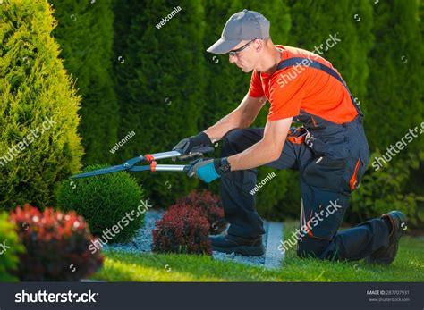 Gardeners Of by Professional Gardener At Work Gardener Trimming Garden