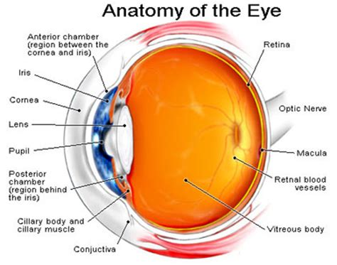 the ey exibition tanvi eye center services cornea ulcer treatment keratoconus management keratoplasty