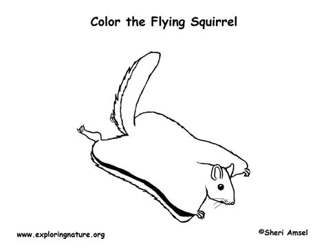 Coloring Page Flying Squirrel | flying squirrels free coloring pages