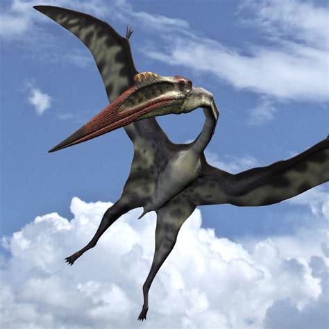dinosauri volanti quetzalcoatlusdr 3d models dinoraul