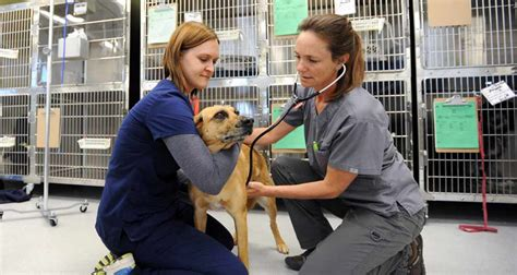 Ross School Of Business Mba Placement In Canada by Vet Tech Externship At Best Friends Leads To