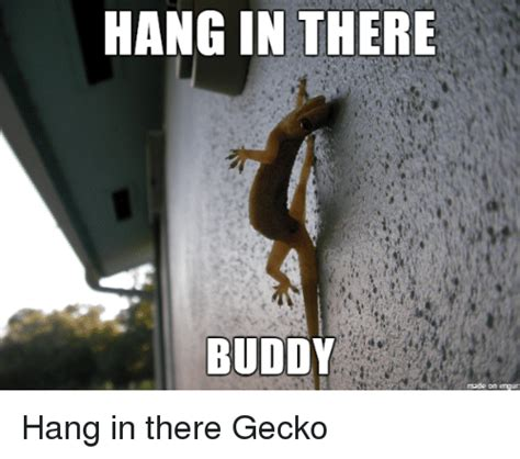 Hang In There Meme - hang in there meme pictures to pin on pinterest pinsdaddy