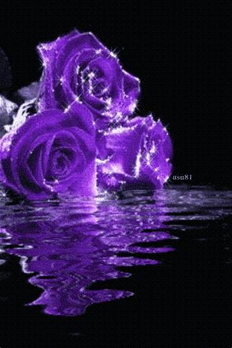 Gamis Roseflowry purple roses live wallpaper android apps on brothersoft