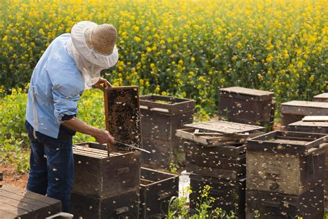 Family Search How To Merge Two How To Combine Two Beehives