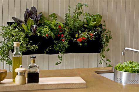 indoor plant decor inspires  houseplants