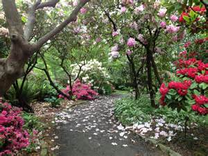 portland s crystal springs rhododendron garden portland travel tips
