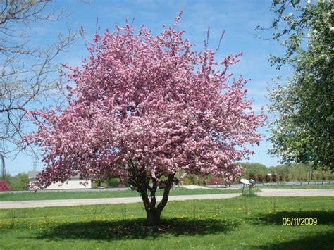 flowering trees and shrubs trees flowering shrubs roarks garden center