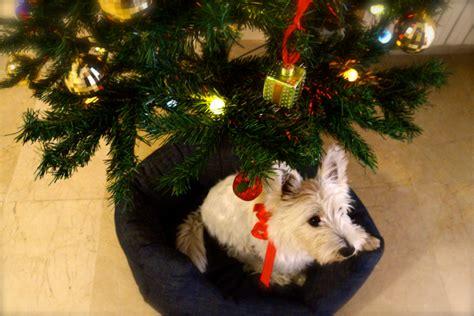 hunde unterm weihnachtsbaum eimsb 252 tteler nachrichten
