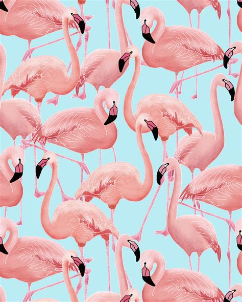flamingo wallpaper to buy a flamboyance of flamingos wallpaper snuugle pinteres