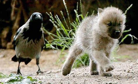bird puppies 217 miscellaneous