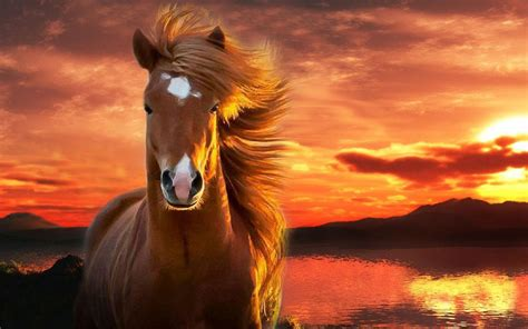wallpaper iphone 6 horse horse wallpapers android apps on google play