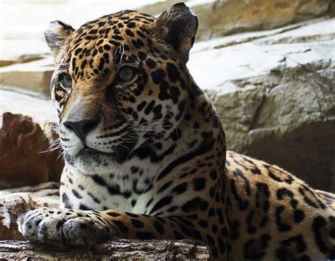 imagenes de animales y plantas de la selva animales de la selva con imagenes y videos