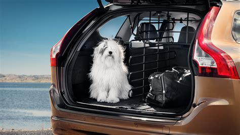 volvo   protect  pooch automobile magazine