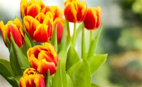 fiori festa mamma fiori festa mamma regalare leitv