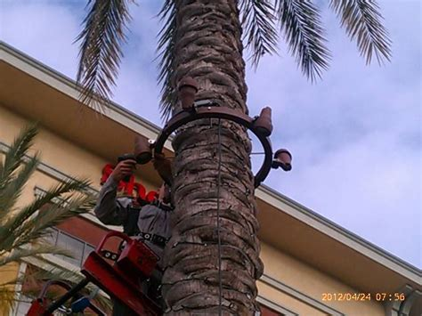 palm tree lighting ring 1000 images about palm tree lighting on trees