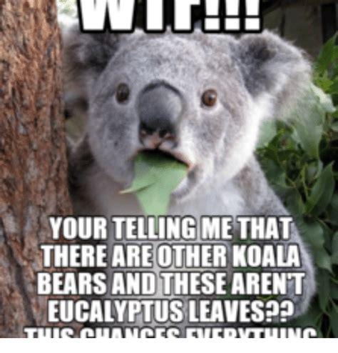 High Koala Meme - evil koala bear meme www pixshark com images galleries