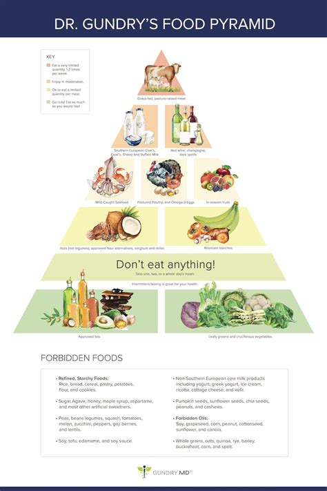 Lectins Gundry Detox Diet by Dr Gundry S New Food Pyramid For Vitality Quot The Plant