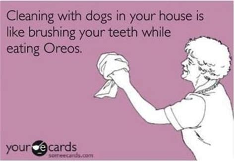 can dogs eat oreos quot cleaning with dogs in your house is like brushing your teeth while
