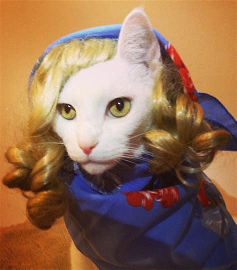 Dress Catty Salem style bite sasscats the best cats in fashion le
