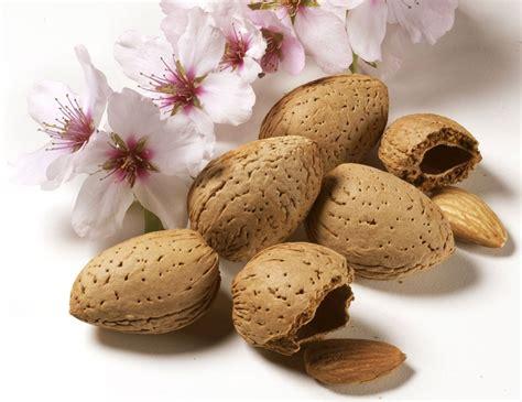olio di mandorle dolci per uso alimentare pin by valeria blaiotta on cosmetica y belleza