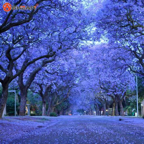 buy artificial trees nz popular tree blue flowers buy cheap tree blue flowers lots