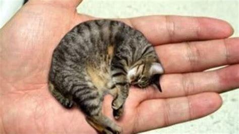 imagenes de animales pequeños 10 animales mas peque 241 os del mundo youtube